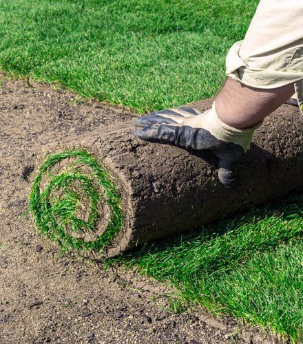 Charlotte landscape and patio services may include new sod.