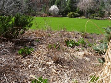5 Tasks for the Spring Garden