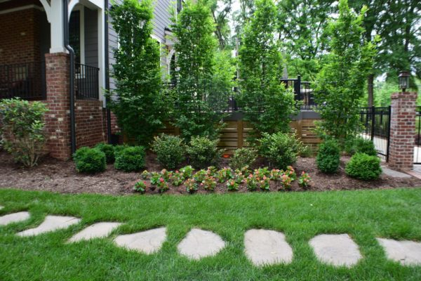 MetroGreenscape landscape design with privacy trees and shrubs in North Carolina
