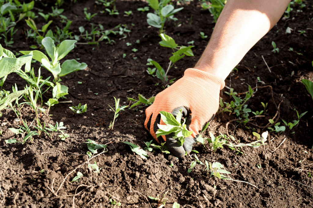 At MetroGreenscape, we like to apply pre-emergent weed control before weed seeds begin to germinate.