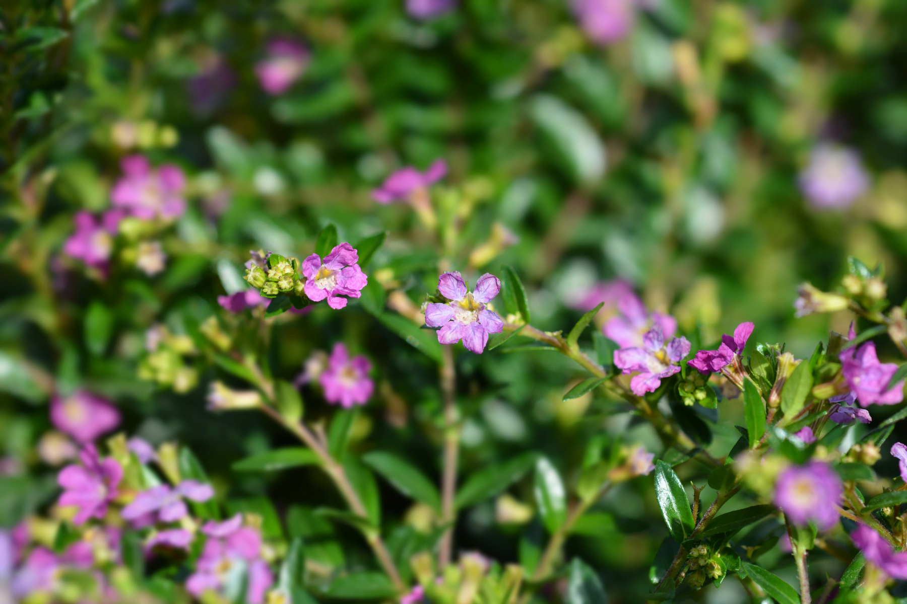 The 5 Best Spring Annuals to Plant in the Carolinas