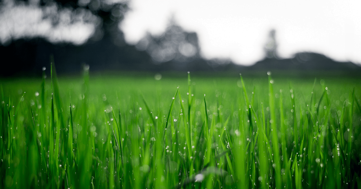 Iron for Lawns: The Secret to Greener Grass